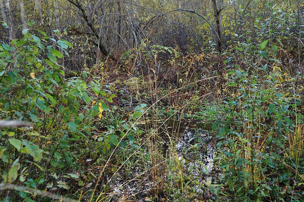 Заболоченный ручей награнице леса